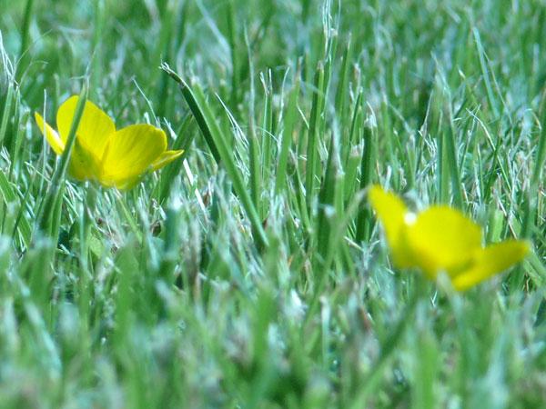 between_grass